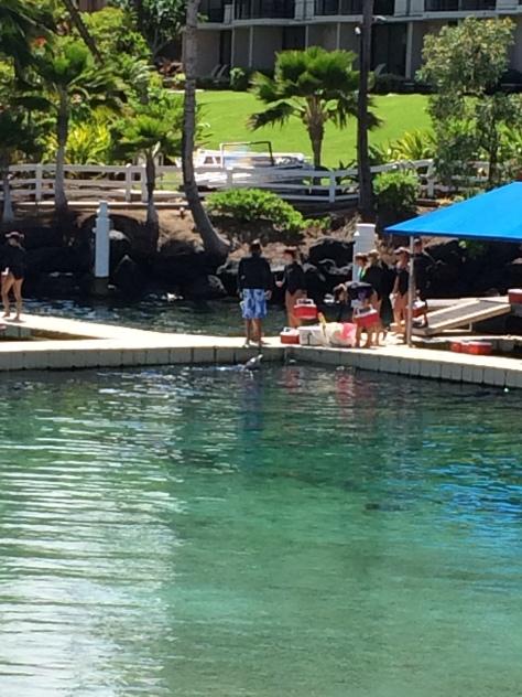Day 4 hawaii 017