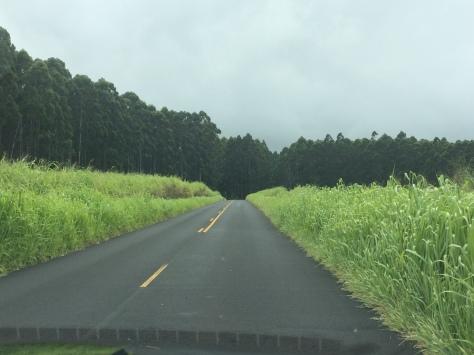 Hawaii Day 2 096