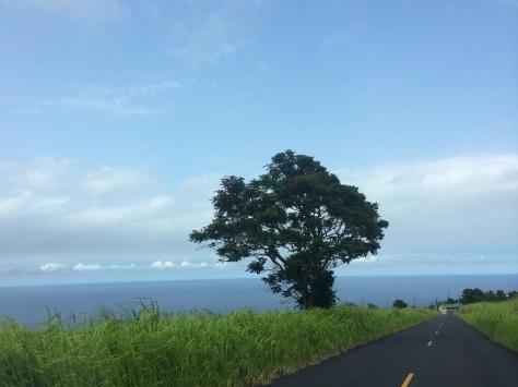 Hawaii Day 2 101